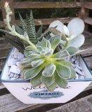 plantenschaal vetplanten_