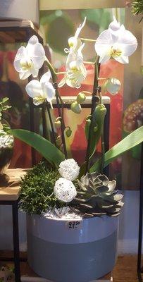 plantenschaal met boogorchidee