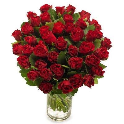 Donkerrode rozen