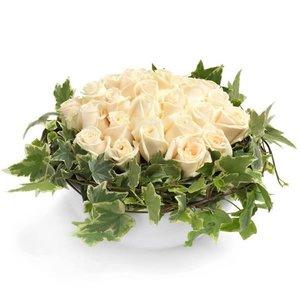 Cremekleurige rozengekte